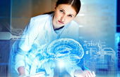 Строение мозга и принцип работы