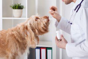 Гормональная терапия простатита у собак